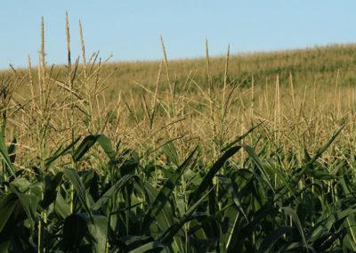children-of-the-corn-666-isaacs-return-1999-5